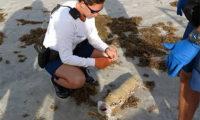 """ამერიკელმა პლაჟზე გიგანტური მარიხუანის """"სიგარა"""" იპოვა"""