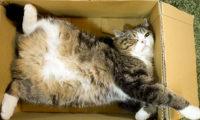 იაპონელი კატა გინესის წიგნში მოხვდა