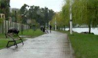 ბათუმის 6 მაისის პარკში 55 წლის ქალი გარდაცვლილი იპოვეს