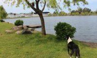 ძაღლი კატას ვერ შესწვდა – ვიდეო ბათუმის ცენტრალური პარკიდან