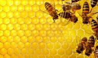 """ლელა ფუტკარაძე – """"თურქი მეფუტკრეები ქართულ თაფლს თურქეთში არ უშვებენ"""""""