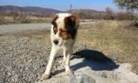 ბაზალეთის ტბასთან ეს ძაღლი ივლისის დასაწყისიდან დღე და ღამე ელოდება პატრონს