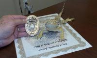 აშშ-ში ხვლიკი პოლიციის ოფიცერი გახდა
