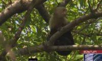 მაიმუნი აშშ-ის საელჩოში შეიჭრა – სკანდალი მეხიკოში