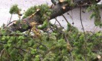 დოლიძის ქუჩაზე 2 მამაკაცს ხე დაეცა