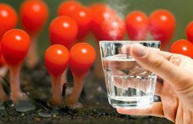 უზმოზე დილით 1 ჭიქა ცხელი წყლის მიღება10 წლითახანგრძლივებს სიცოცხლეს