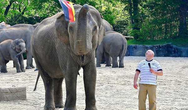 სპილომ გერმანიის ნაკრების წაგება იწინასწარმეტყველა
